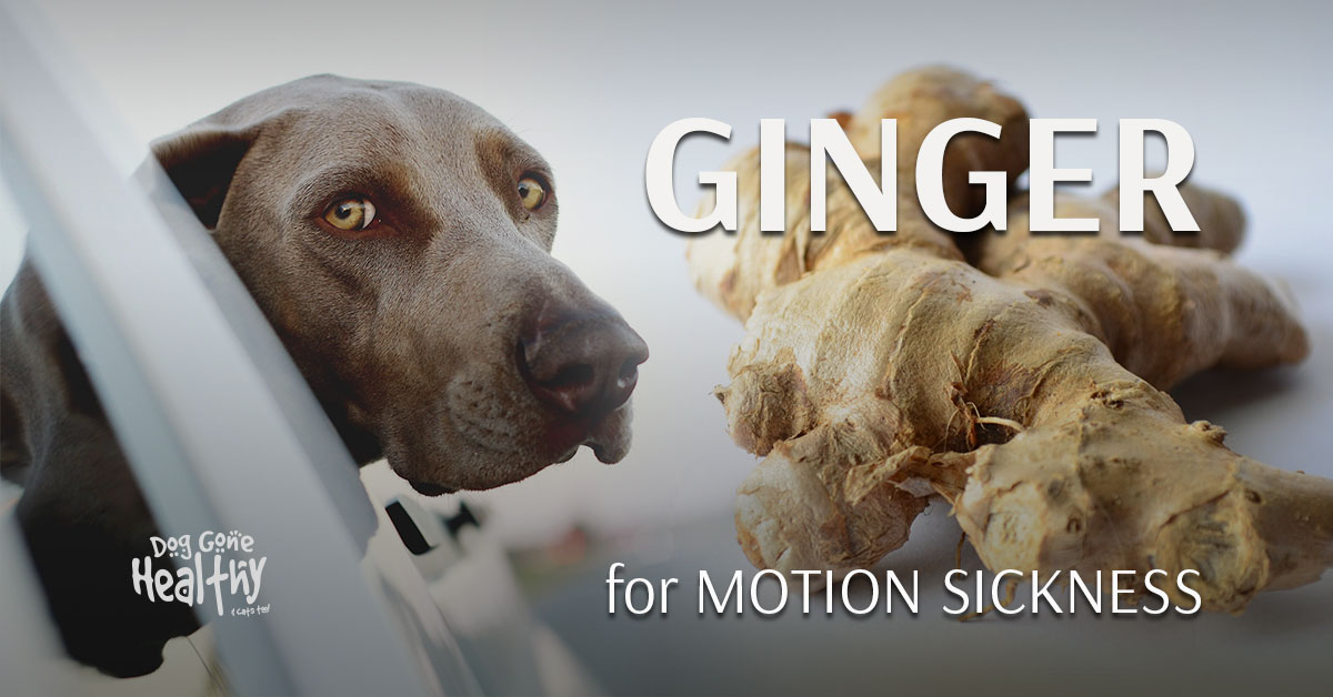 Can Dogs Have Ginger For Nausea