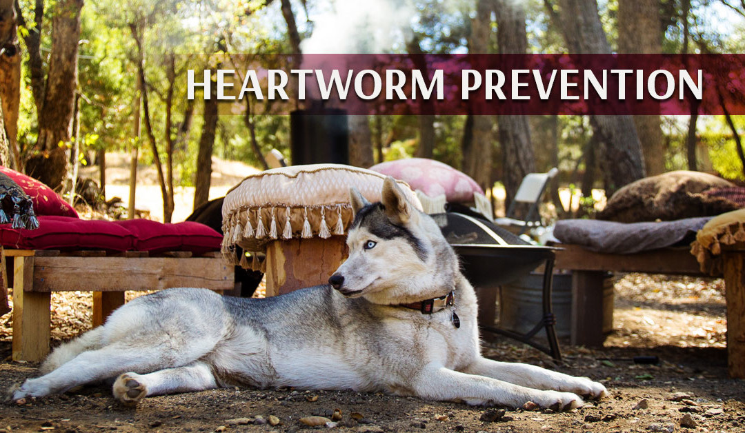Natural Heartworm Prevention for Your Pet