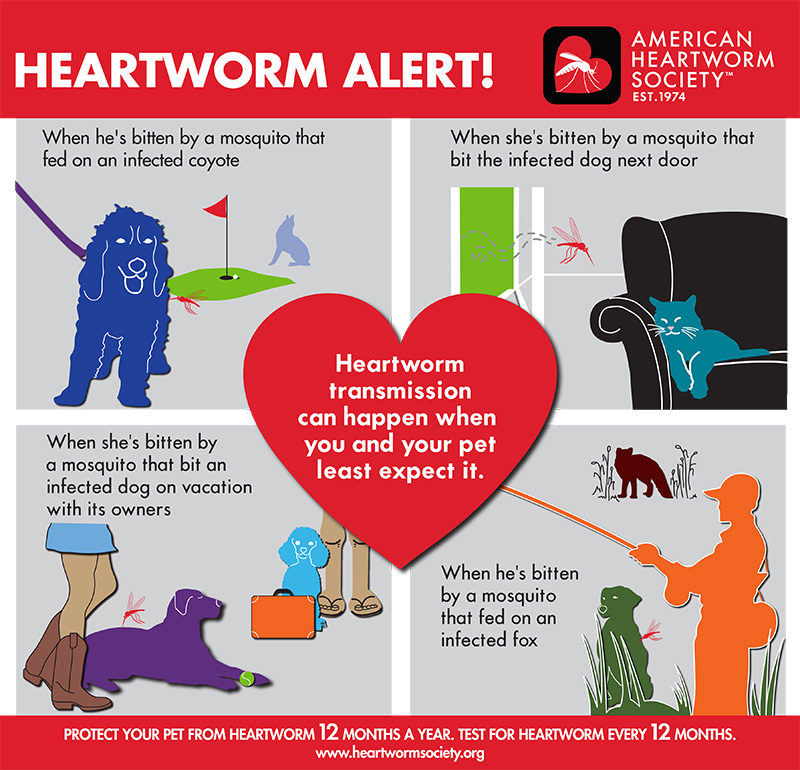 American Heartworm Society - Natural Heartworm Prevention