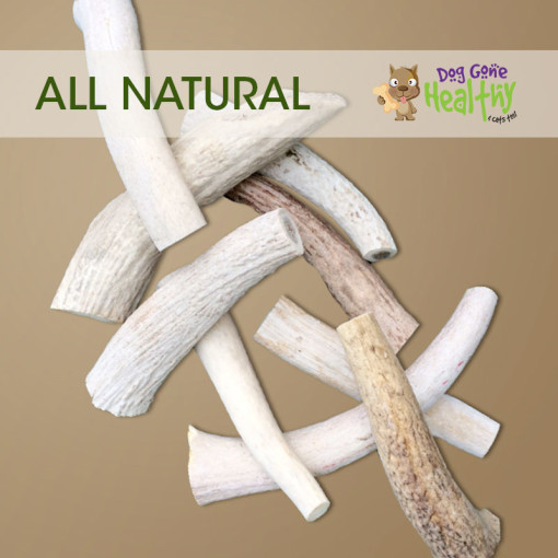 Dog Gone Healthy - Medium Antlers for Dogs