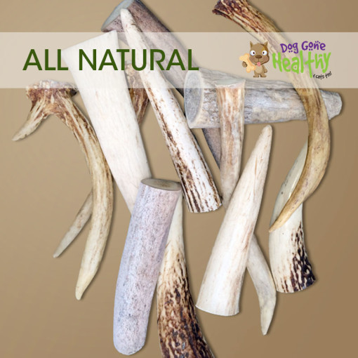 Dog Gone Healthy - Small Antlers for Dogs
