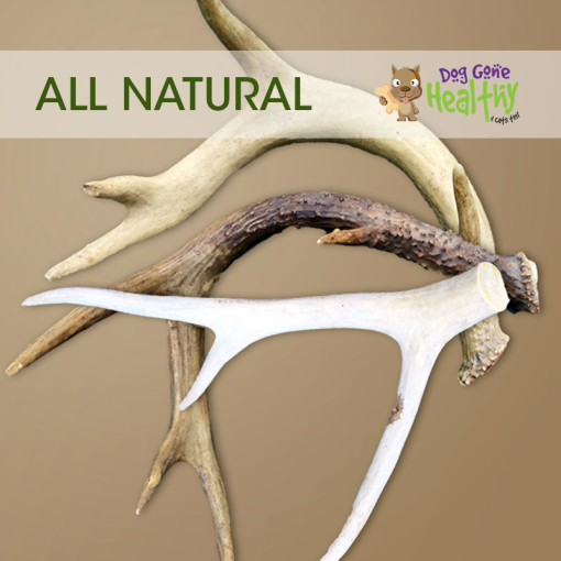 Dog Gone Healthy - XLarge Antlers for Dogs