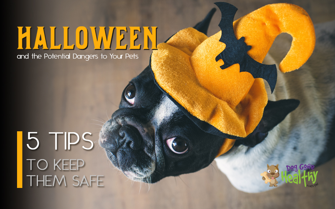 5 Tips for Keeping Your Pet Safe on Halloween