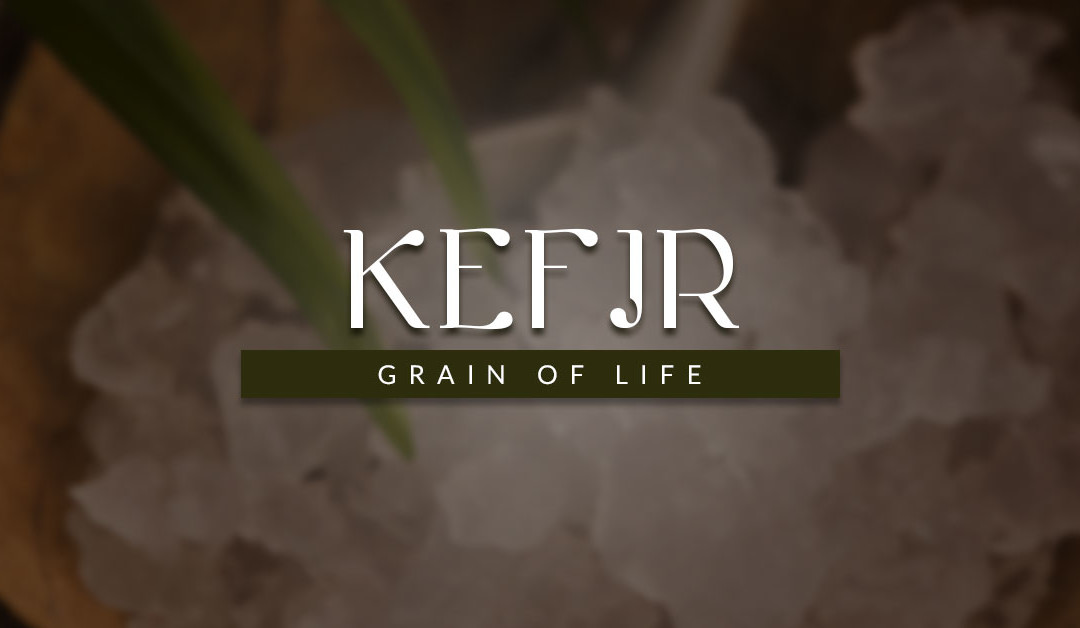 Kefir Water for Dogs Recommended Minimum Daily Dosage